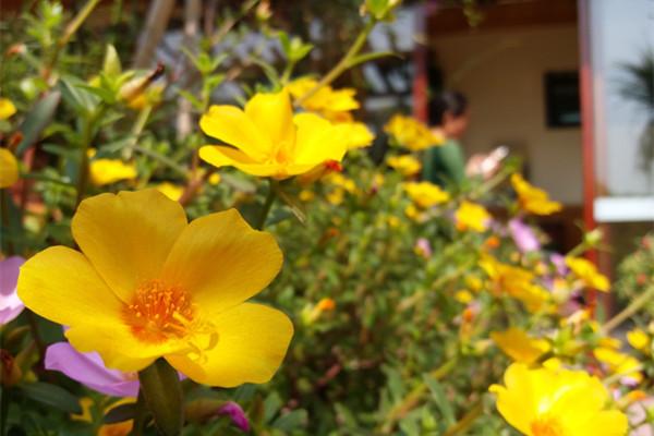 泰晟瑜伽空中花园